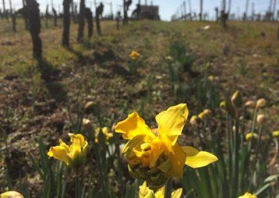 Parcelle agricole haut Montlong